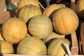 meloni frutto primaverile estivo