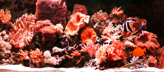planted tropical freshwater aquarium with fishes