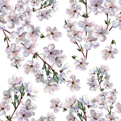 Blooming plum, watercolor