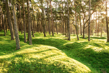 the bomb craters of the battlefield at Vimy France WW1