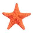 Leinwanddruck Bild - Caribbean starfish isolated on white background.