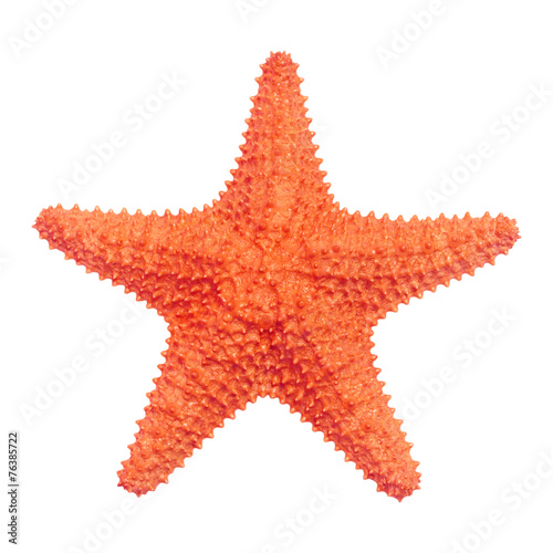 Caribbean starfish isolated on white background. - 76385722