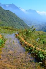 Rice fields, Sapa, Vietnam
