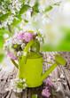 Obrazy na płótnie, fototapety, zdjęcia, fotoobrazy drukowane : Spring blossoms background