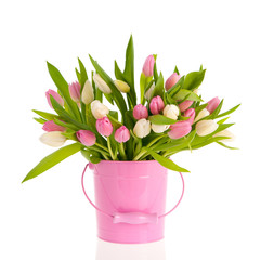 Pink and white tulips in bucket