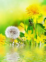Field flowers buttercup. yellow flower