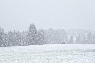 snowstorm in Bavariah meadows