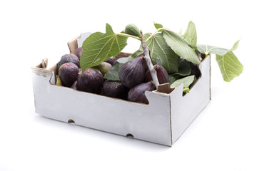 two kilogram fig