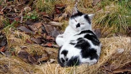 Katze vid 06