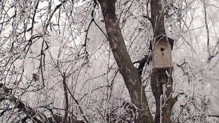 Birdhouse in Winter Forest