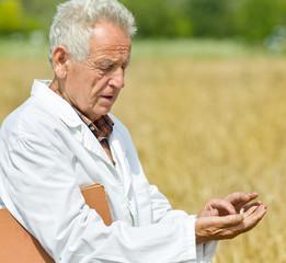 Agronomist in wheat field