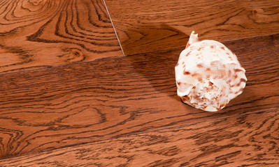 Sea cockleshell on a wooden background