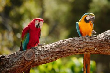 Parrot at Currumbin Wildlife Park, Qld, Australia