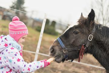 girl feeding a big horse
