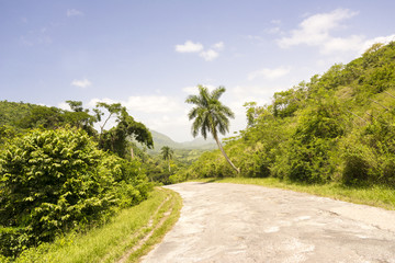 Long road or way among exhuberant vegetation in tropical country