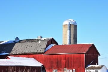 Birds on the Barn
