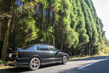 車のサイドビューと杉林