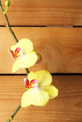 Orchid flowers on wooden background
