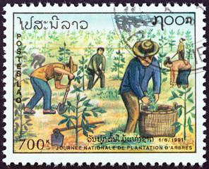 Planting saplings (Laos 1991)