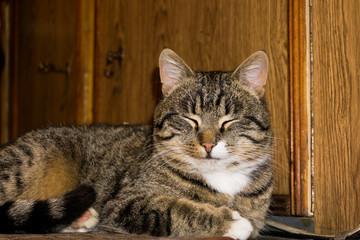 Tabby Cat Posing