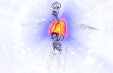 3d render medical illustration of the human lung