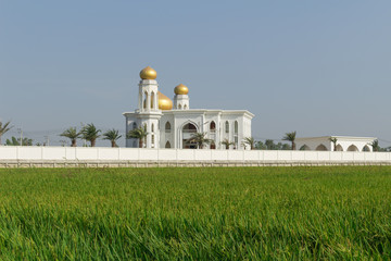 Mosque with the rice field background