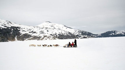 Panorama of huskies and malamutes pull dog sled rider tourists a