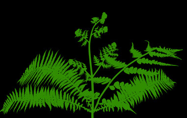 fern bush green silhouettes isolated on black