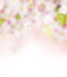 Fototapety Abstract blurry spring background