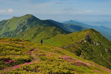 Trekker walking on the flowers field in the mountain