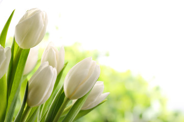 White Tulips © lily