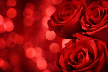 Red roses on bokeh background