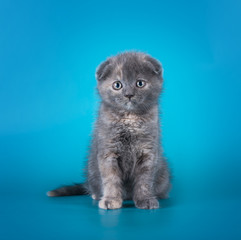 young kitten on a colored background isolated
