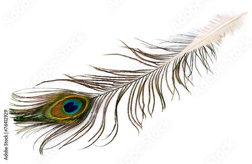 Keuken foto achterwand Pauw peacock plume