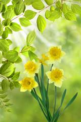 Frühling 331