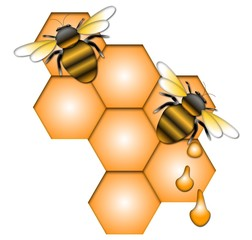 Two bees on honeycomb