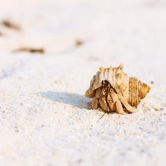 Hermit crab at beach