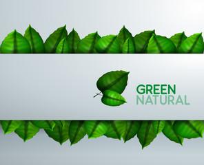 Presenación con hojas naturales y verdes. Fondo de naturaleza
