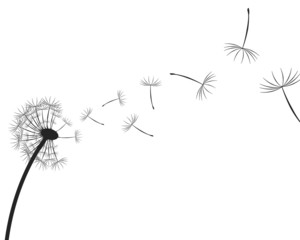 Dandelion seeds silhouette