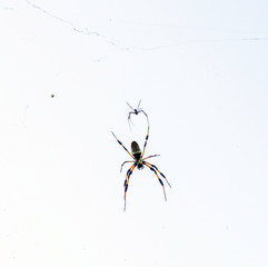 2 spiders in cobweb