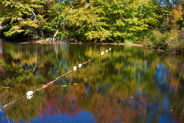 Line of buoys across river with fall colors