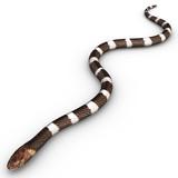 venomous snake poster