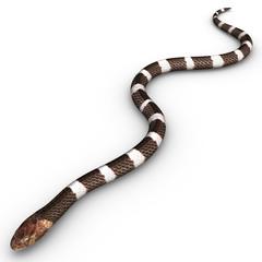 venomous snake