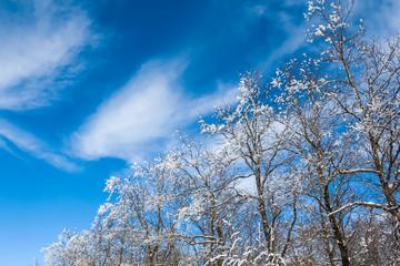 closeup snowbound trees