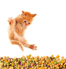 Cat and dry food for animals