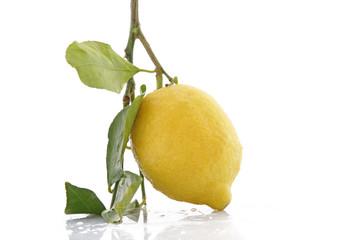 Citron frais