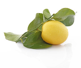 Rameau de citronnier