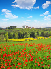 Spring landscape with poppy field and blue sky
