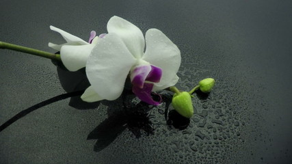 sprinkling orchid slow motion