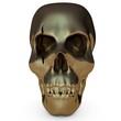 canvas print picture - Skull001